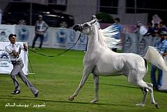 555 (youseffoto) Tags: yousef    alsaem