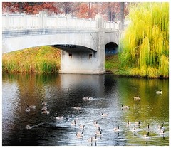 Lincoln Park Bridge (cphilruns over a quarter million views) Tags: park trees water stone wisconsin geese relaxing lincolnpark kenosha