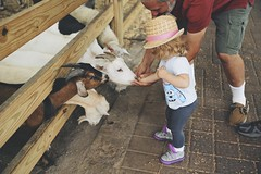 feeding the animals with Pops (Francesca Russell) Tags: lila age1 whitepostfarms