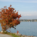 Kreuzlingen - Parkanlage am Bodensee (1) thumbnail