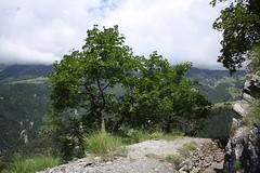 Torrent-Neuf (bulbocode909) Tags: nature suisse vert arbres valais montagnes bisses savise torrentneuf