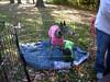 GreyhoundPlanetDay2010007