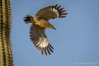 Flight for Food