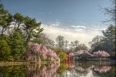 Koi Pond Cherries (HorsePunchKid) Tags: gothamist brooklynbotanicgarden torii hdr japanesehillandpondgarden qtpfsgui seenongothamist bbgcalapril bbgcalstructures bbgcalcherries