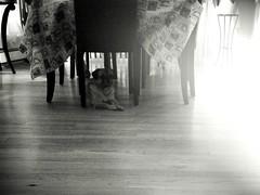 Day 208 of 365 (MarcKellyPhotog) Tags: light blackandwhite bw dog white black dark puppy photography james photo lomo lomography pug sleepy marc kelly pup jamesthepug