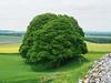 Old Sarum (RS_1978) Tags: uk england tree unitedkingdom gb salisbury fortification wiltshire baum festung vereinigteskönigreich grosbritannienundnordirland olympusem5ii