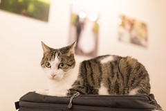 Portrait of Cesar the Cat (swissfotopia) Tags: 5dmarkiv test cat katze bokeh portrait low light lowlight