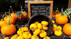 Fall Pumkins (suebmtl) Tags: pumkins fall autumn market quebec colorful orange harvest thanksgiving citrouille food