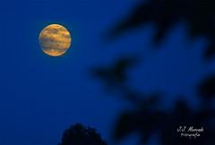 _DSC3136 (kunkache) Tags: kunkache luna nocturnas