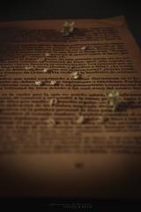 Nuva Blanca (Luna del alba) Tags: pgina amor flor blanca nuva blanco libro antiguo juliana fotografa garca verdad del de mi seor jesus paz libertad esperanza eterna realidad