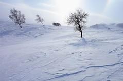 _MG_7455 (c0466art) Tags: 2015 chinese inner mogolia trip travel  grass land hill winter season snow world sunrise trees ice beautiful landscape scenery light canon 1dx c0466art