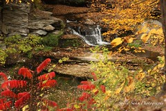 IMG_9264 (Sally Knox Sakshaug) Tags: letchworth state park new york fall autumn october colors leaf leaves orange yellow stone grey gray brown green red beautiful pretty scenic waterfall water white spectacular falls beauty genesee river portagecanyon wolf creek area small delicate simple quiet