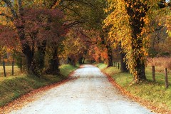 Of Autumn. . . (Irina1010) Tags: road autumn colors trees countryside cadescove sparkslane beautiful october nature canon outstandingromanianphotographers ngc npc