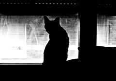 Chiechan (Gurutx) Tags: cat gatito blancoynegro wb lindogatito gato monocromo