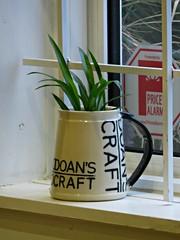 Doan's Craft (knightbefore_99) Tags: doan brewing eastvan cool art tasting room painting powell street awesome plant pot green craft herb mug