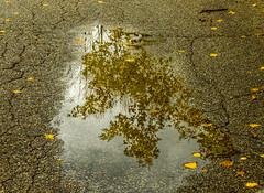 road reflections (vernonbone) Tags: 1855kitlens 2016 autumn d3200 eastpoint eastpointpark lens ontario september colors hicking landscape nikon outside stuff
