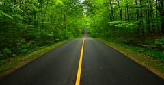 All Alone,Follow your dreams (Vivek Sharma K) Tags: explore climatechange seasonchange neverendingroad windingroad tress trees canopy blendonwoods columbus ohio blendonwoodsmetropark