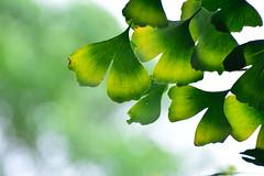 Huanhuan mountain, Nantou, Taiwan (   ) (_Kuan) Tags: huanhuan mountain nantou taiwan     beautiful awesome leaves green