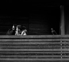 Not Right (yastengur) Tags: street streetphotography bwstreetphotography blackandwhite bw bandw faces people textures bird pigeon london st james park rule odds 3 half square
