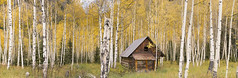 The Old Cabin in the Forest (Lake Vermilion1) Tags: rustic cabin old forest aspen trees aspentrees autumn foliage fall colorado crystal ghosttown mill marble nlkond810 gitzo reallyrightstuff nikon abandoned panoramic