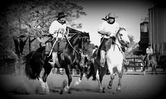 Ao trotesito (Eduardo Amorim) Tags: gacho gachos gaucho gauchos cavalos caballos horses chevaux cavalli pferde caballo horse cheval cavallo pferd crioulo criollo crioulos criollos cavalocrioulo cavaloscrioulos caballocriollo caballoscriollos pampa campanha uruguaiana riograndedosul brsil brasil sudamrica sdamerika suramrica amricadosul southamerica amriquedusud americameridionale amricadelsur americadelsud cavalo         hst hest hevonen  brazil eduardoamorim
