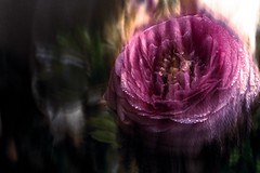 500px.com/photo/185925373/ #Passion (KT.pics) Tags: 500px flower macro glitch imperfection blur nature abstract power emotion koukichi takahashi ktpics plant beautiful fine art purple pink dark motion camera shake botany head mysterious gorgeous light shadow shiny atmosphere mood moody moment