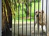 Behind Bars (sallyNZ) Tags: scavenger7 behindbars dog gate