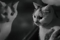 kedi (nurullahguney) Tags: cat kedi bw