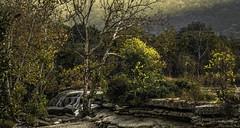 Auric Moment (keith_shuley) Tags: goldenhour austin texas bullcreek sunrise landscape waterfall yellow olympus