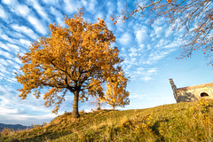 Reach down, and pick the crown up (stefan.el77) Tags: istrien tree autumn fall sky clouds fleecy church top landscape croatia