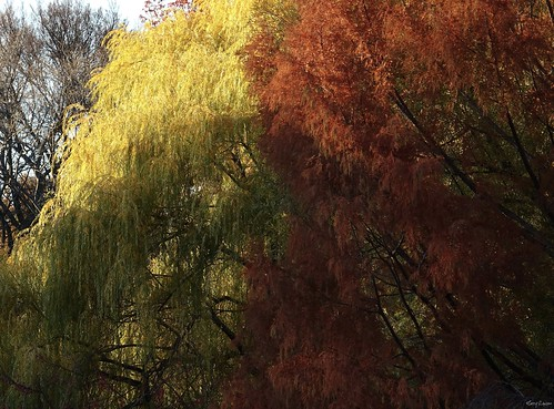 """Weeping Willows • <a style=""""font-size:0.8em;"""" href=""""http://www.flickr.com/photos/52364684@N03/31040613126/"""" target=""""_blank"""">View on Flickr</a>"""