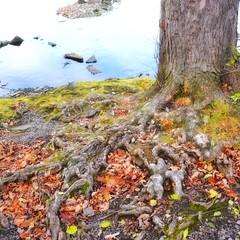 Ottawa River afternoon (Digitalfish3) Tags: treesandfoliage autumn tree river ottawariver ottawa
