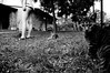 Chi ti Kitty (Angelica Gallorini) Tags: kitty cats gattini gatti cat selvapiana agriturismo prato cantagallo felini miao meo eyes sguardo giochi tre three