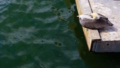 Curved (briantolin) Tags: santamonica california losangeles bird water wildlife
