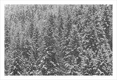 _MAH7681-Modifier (anthonymahieu   photos) Tags: france nature landscape paysage winter hiver snow neige forest fort tree cold frost bw blackandwhite noiretblanc