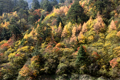 Autumn colors (Mel s away) Tags: sichuan china    chanmelmel mel melinda melindachan tibetan