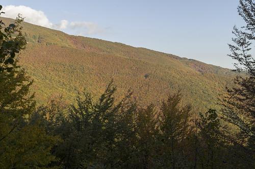 Beech forest, 10.10.2014.