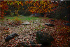 Otoo (juanmerkader) Tags: andaluca andalusia autumn espaa europe faunayflora floresyplantas jerezdelmarquesado mediterraneo naturaleza nikond750 otoo photovida picture spain travel nature nikon pic picofftheday picoftheday
