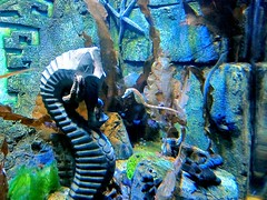 Sea horses (judy dean) Tags: light fish aquarium seahorses birminghamsealifecentre blinkagain
