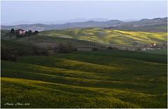 PER LA STRADA DI MONTALCINO (mauro855) Tags: italia natura siena montalcino toscana valdorcia paesaggi 2012 panorami nikond60 abigfave mauronizzi mygearandme magicavalle