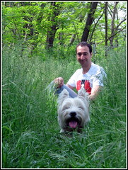 ...tiens, une bte des champs.... (LILI 296 ...) Tags: dog chien france spring duo westie perro campagne printemps homme herbe hautegaronne midipyrnes canonpowershotg12