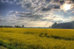 Dehme Countryside in May 3 (blavandmaster) Tags: park bridge trees sky sun colour reflection tree green art nature water beautiful grass yellow clouds buildings reflections river germany season landscape deutschland licht soleil countryside gut spring eau colours seasons cloudy awesome horizon natur may meadow himmel wolken sunny rivire ciel arbres owl land handheld nrw weser chateau nuages landschaft sonne bume allemagne parc hdr rapeseed westfalen ostwestfalen weserrenaissance wasserschloss contryside lhne photomatix 2013 ulenburg obernbeck dehme