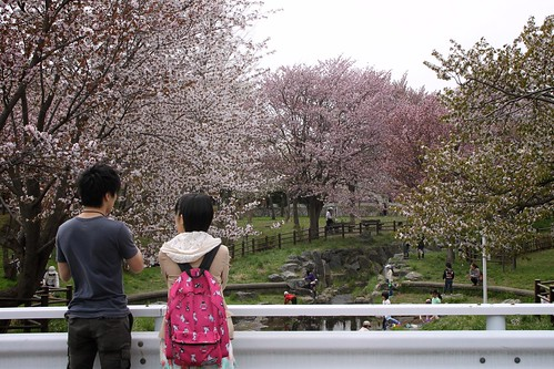 The season for cherry-blossom viewing has come!