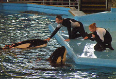 Takara and Sakari (GypsySkye7) Tags: sanantonio believe orca seaworld shamu takara killerwhale captivity sakari