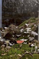 """Ausstellung """"Pilze: Netzwerker der Natur"""" (Universalmuseum Joanneum) Tags: graz pilze ausstellung joanneum schwammerl naturkundemuseum universalmuseum joanneumsviertel"""