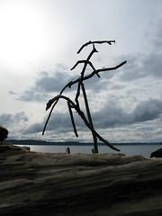 Wrack (Shiftwood Sculpture) Tags: travel sculpture plants art beach nature animals river landscape photography mobiles northwest driftwood