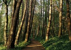 Krleksstigen (heddar) Tags: film nature analog forest analogue gotland visby 135mm 13536