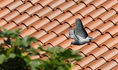 eggdrop (redchamboalert) Tags: news pigeon egg flight shell gothamist