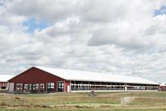 A day at Marshfield ARS (UWMadisonCALS) Tags: holstein arsx dayx trialx fieldx calfx barnx birthx cowsx dairyx foragex soilsx marshfieldx freshenx milkingx parlorx machinesx tractorsx
