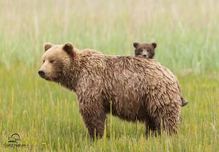 Hide and Seek, Brown Bear Style